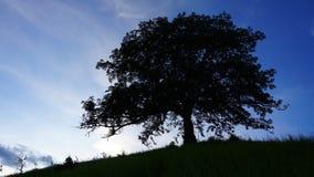 Einziger Baum Timelapse stock footage