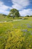 Einziger Baum und bunter Blumenstrauß von den Frühlingsblumen, die weg von Weg 58 auf Shell Creek-Straße, westlich von Bakersfiel lizenzfreie stockfotografie