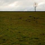 Einziger Baum und ein grünes Feld Stockfotos