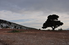 Einziger Baum unter bewölktem Winterhimmel Stockbilder