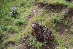 Einziger Baumstumpf in der Wiese mit Blumen Lizenzfreies Stockfoto