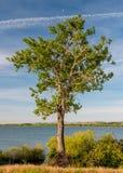 Einziger einzelner Baum mit einem Halbmond nahe einem See lizenzfreie stockfotografie