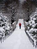 Einziger Mann, der durch schneebedeckten Wald geht Stockfotos