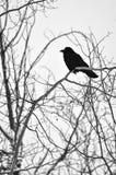 Einziger Rabe auf bloßem Winter-Baum lizenzfreie stockfotos
