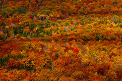 Einziger roter Baum in Autumn Mountain Landscape Lizenzfreies Stockbild