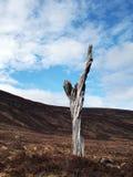 Einziger toter Baum in Schottland-Hochländern Stockbilder