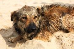 Einziger trauriger Hund, der auf der Straße liegt Stockbilder
