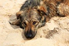 Einziger trauriger Hund, der auf der Straße liegt Lizenzfreies Stockbild
