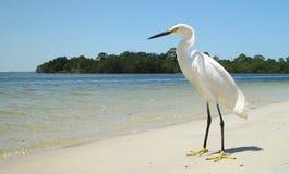 Einziger weißer Reiher auf sandigem Florida-Strand Stockfotografie