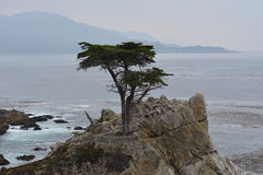 Einziger Zypern-Baum Lizenzfreies Stockfoto