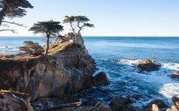 Einziger Zypresse-Baum in einem 17 Meilen-Antrieb Lizenzfreies Stockbild