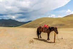 Einziges begrenztes Pferd in Mongolei stockfoto