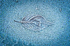 Einziges Blatt im Winterfrost Stockfotografie