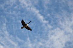 Einziges Gans-Flugwesen in einem schönen Himmel stockbild
