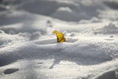 Einziges gelbes Blatt im Schnee stockbild