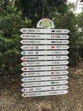 Einziges Kiefernkoalaschongebiet Brisbane lizenzfreie stockbilder