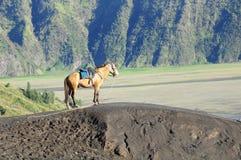 Einziges Pferd Lizenzfreies Stockfoto