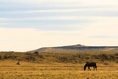 Einziges Pferd in der Steppe lizenzfreies stockfoto