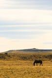 Einziges Pferd in der Steppe lizenzfreies stockbild
