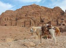 Einziges Pferd nahe den Ruinen in PETRA Stockfotos