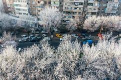 Eis auf Bäumen in der Stadt Stockbild