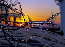 Eis auf Baumasten bei Sonnenuntergang Stockfoto