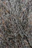 Eis auf den Zweigen Gefrorener Baum lizenzfreie stockfotos