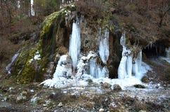 Eis auf einem Gebirgswald Stockfotografie