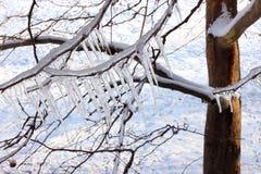 Eis auf einem gefrorenen Baum Stockbilder