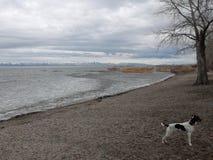 Eis auf Gebirgsbucht mit Hund Lizenzfreie Stockfotografie