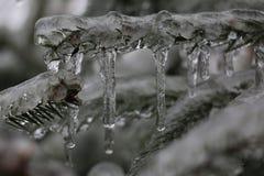 Eis auf Kiefer Lizenzfreies Stockbild