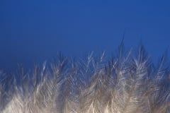 Eis auf Zweigen Stockbilder