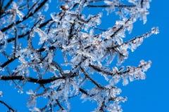 Eis auf Zweigen Stockfotos