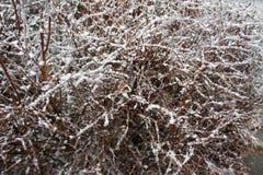 Eis-bedeckte Büsche stockfotos