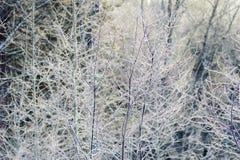 Eis bedeckte Baumbrunchs im schneebedeckten Wald Stockfotos