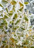 Eis bedeckte bunten Autumn Leaves Stockbilder