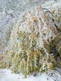Eis bedeckte bunten Autumn Leaves Stockfotografie