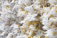 Eis bedeckte bunten Autumn Leaves Stockbild