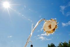 Eis bedeckte Sonnenblume Lizenzfreie Stockfotos