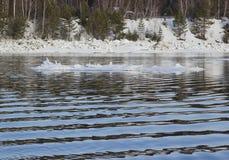 Eis, das im Fluss treibt stockfoto