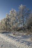 Eis deckte Bäume ab Stockbild