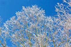 Eis deckte Bäume ab Lizenzfreie Stockbilder