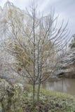 Eis deckte Baum ab Lizenzfreie Stockfotografie