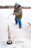 Eis-Fischer, der einen großen Pike zieht Stockfoto