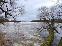 Eis Fluss Nemunas im Frühjahr und alte Bäume, Litauen Lizenzfreie Stockfotografie