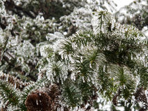 Eis freezed Bäume Lizenzfreies Stockbild