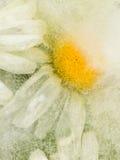 Eis gefrorene Abstraktion mit Gänseblümchen Lizenzfreie Stockfotografie