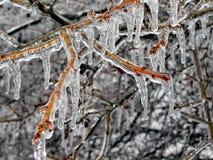 Eis-Glied Lizenzfreies Stockbild