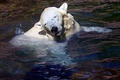 Eis oder Eisbär Lizenzfreie Stockfotografie