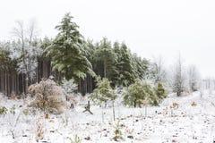 Eis, Schnee, Baum, Winterszene Lizenzfreie Stockbilder